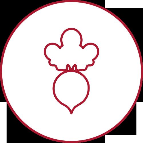 zucchero-di-barbabietola-hover